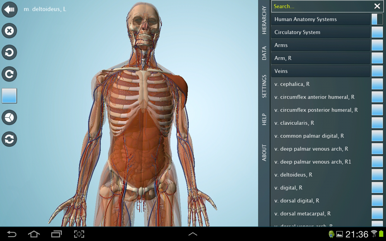 Anatomy interactive games