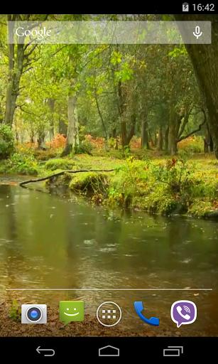 Дождь в лесу - Видео живые обои скачать на планшет Андроид