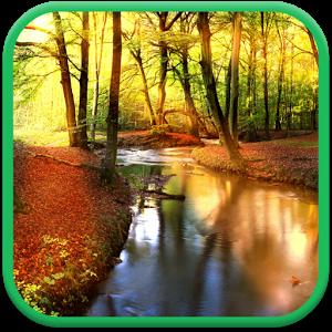 Осенний Лес — Живые Обои