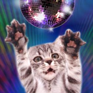 Диско Коты. Танцы