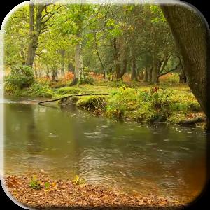 Дождь в лесу — Видео живые обои