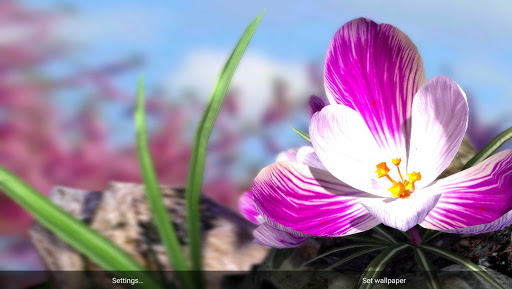 Nature Live: Spring Flowers XL для планшетов на Android