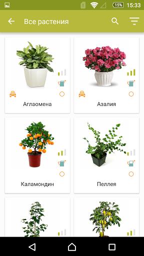 Комнатные растения скачать на планшет Андроид