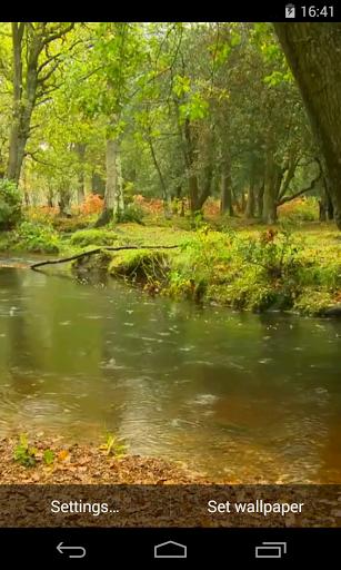 Дождь в лесу - Видео живые обои скачать на Андроид