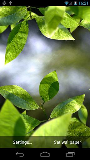 Fresh Leaves скачать на Андроид