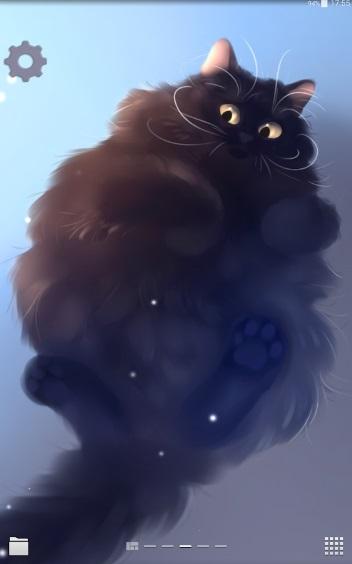 Big Chubby Cat