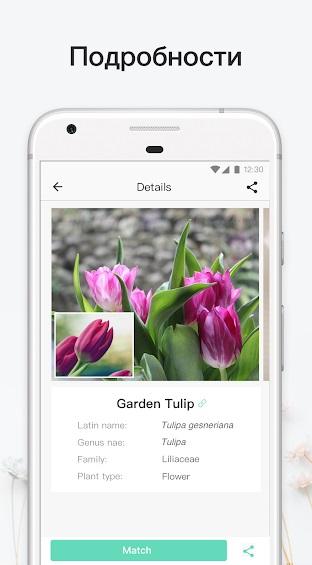 PictureThis на Андроид
